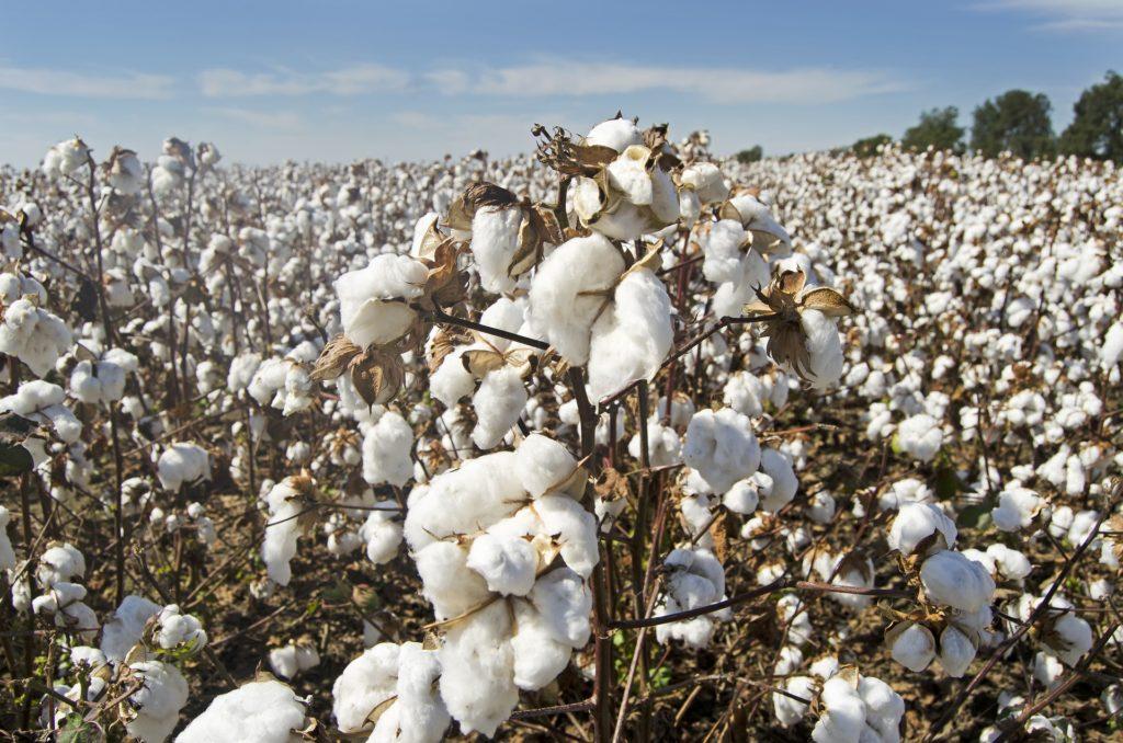 polo en coton